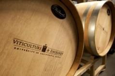 20121005_wine_crush_2548-300x199